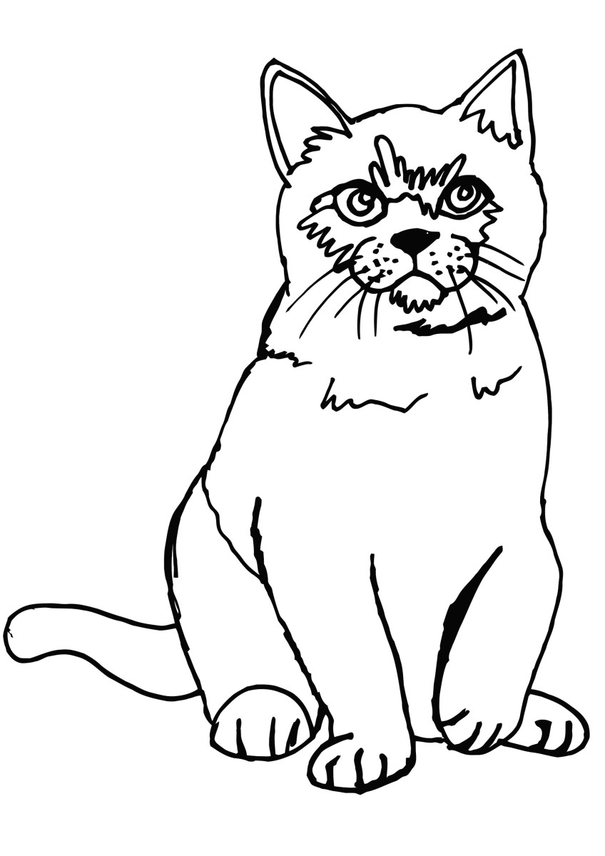cat printable pet cat and twi little kitten coloring page coloring sky cat printable