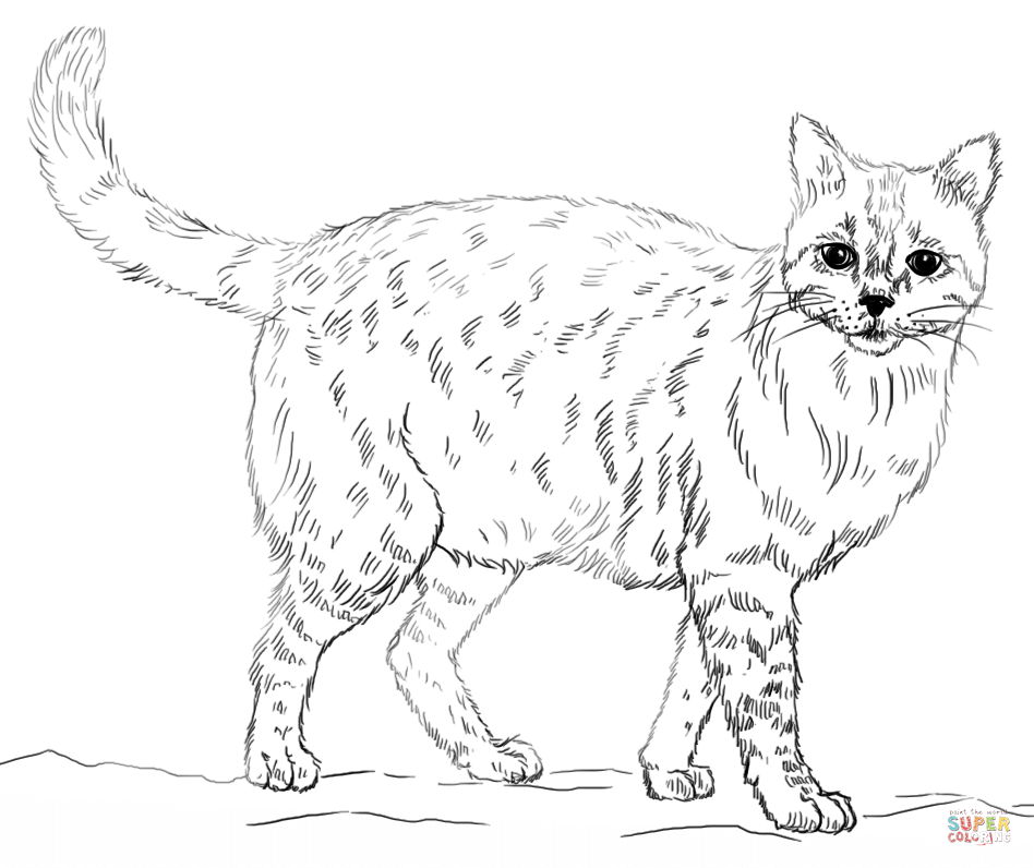 cat to color cat to color for kids cats kids coloring pages color to cat
