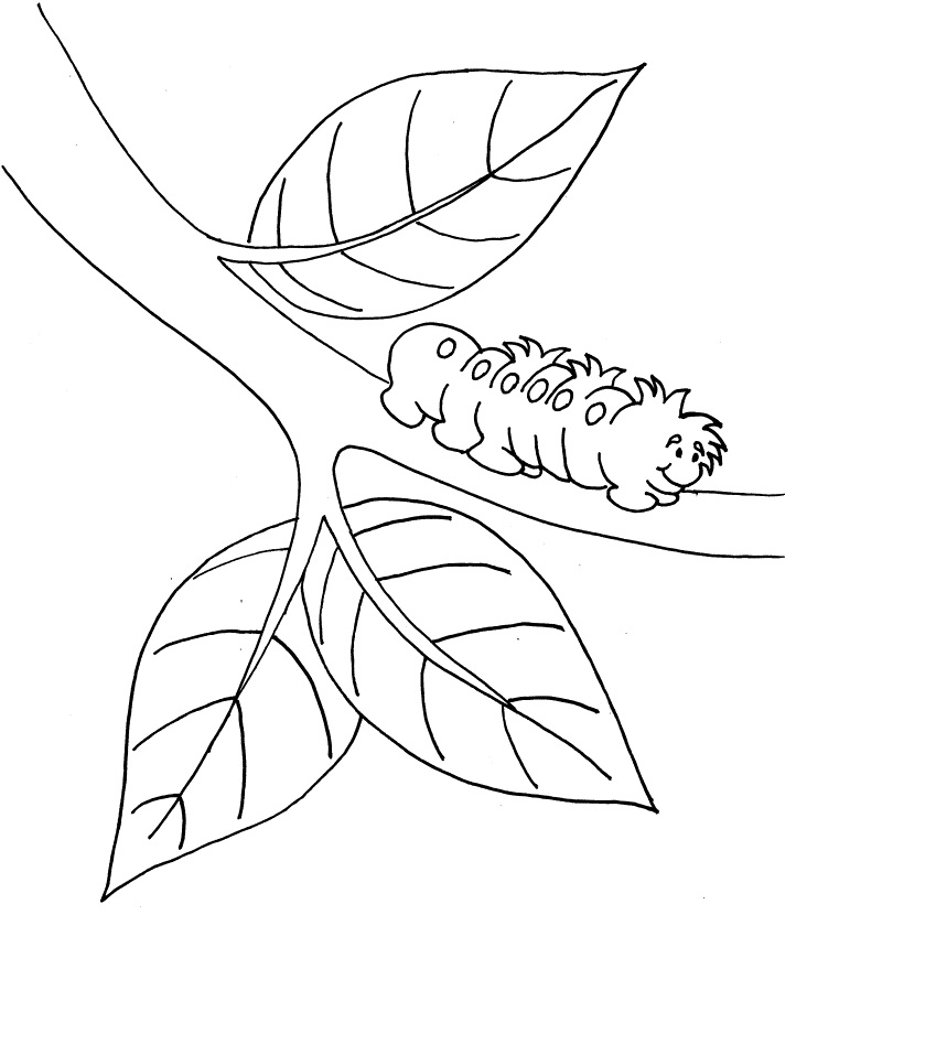 caterpillar for coloring free printable caterpillar coloring pages for kids coloring caterpillar for 1 1