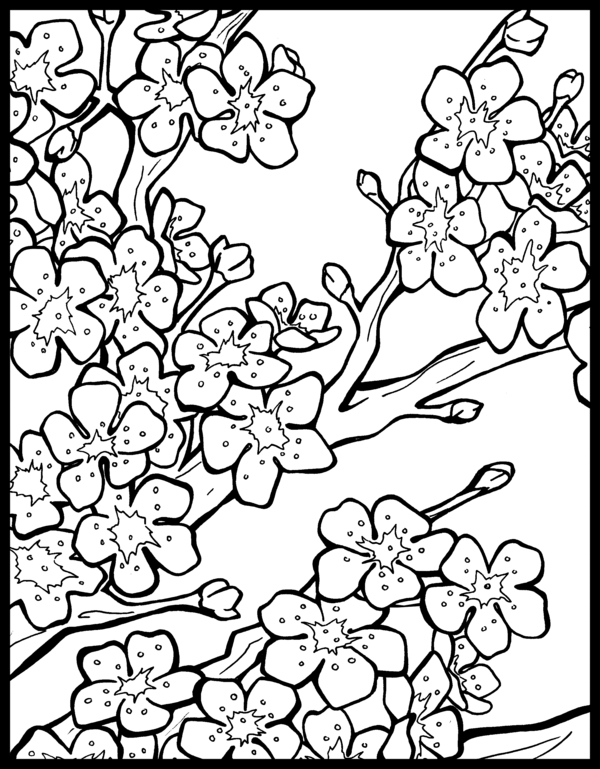 cherry blossom coloring pages sacred cake by jennifer valentine free friday oriental pages coloring blossom cherry