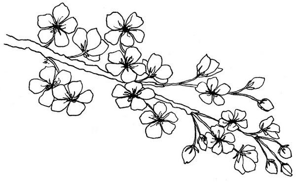 cherry tree sketch blossom branch flower doodles embroidery patterns cherry tree sketch