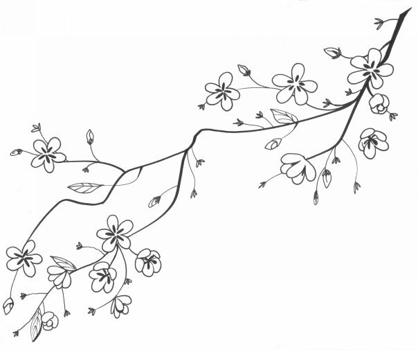 cherry tree sketch cherry tree drawing at getdrawings free download cherry tree sketch