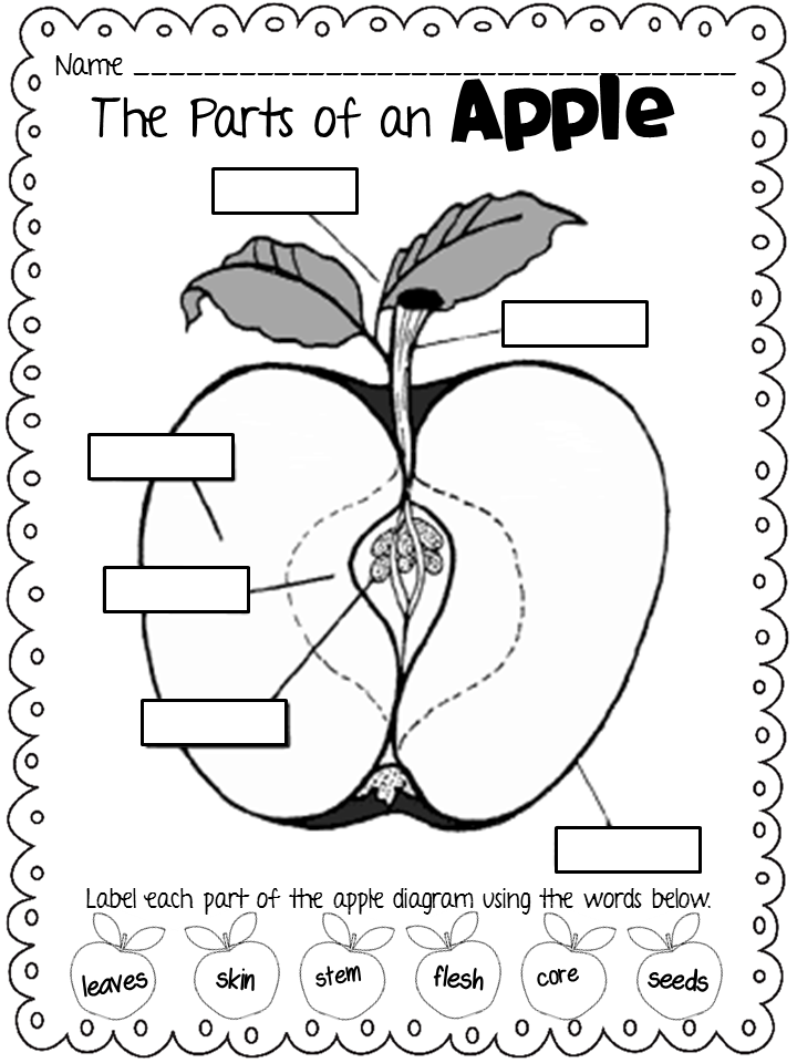 coloring apple worksheets for preschool a is for apples massive packet preschool coloring for worksheets apple
