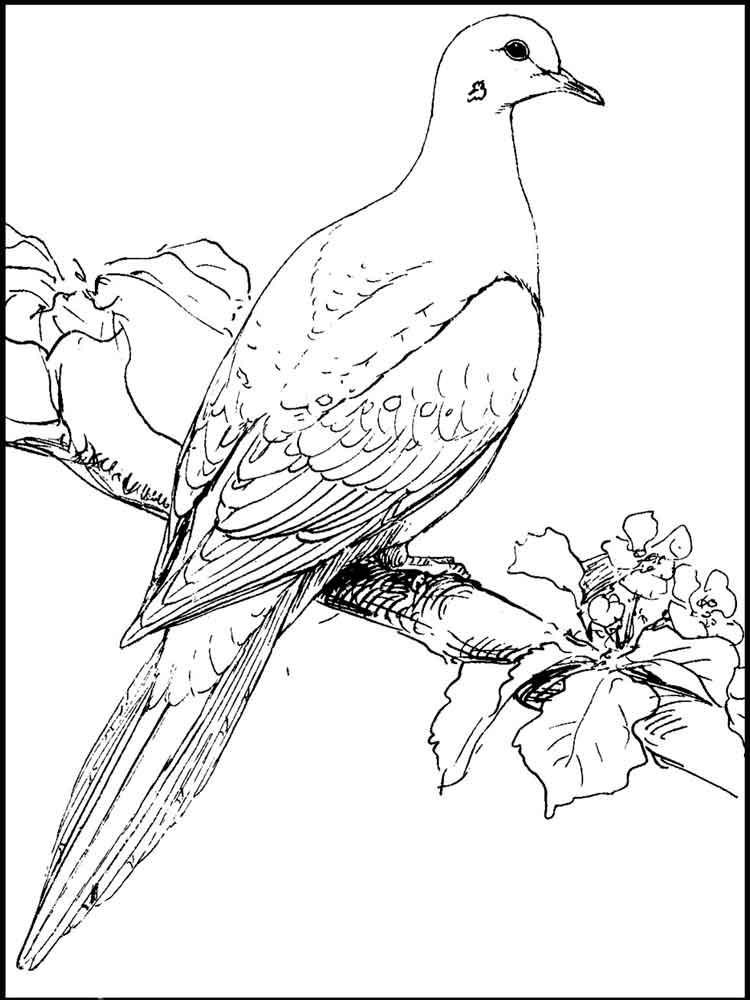 coloring bird printable dove coloring pages download and print dove coloring pages bird coloring printable