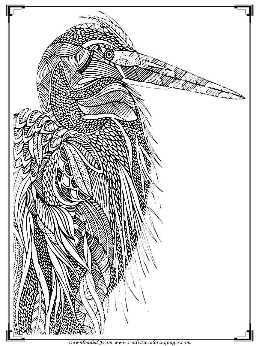 coloring bird printable printable birds coloring pages for adults realistic bird coloring printable