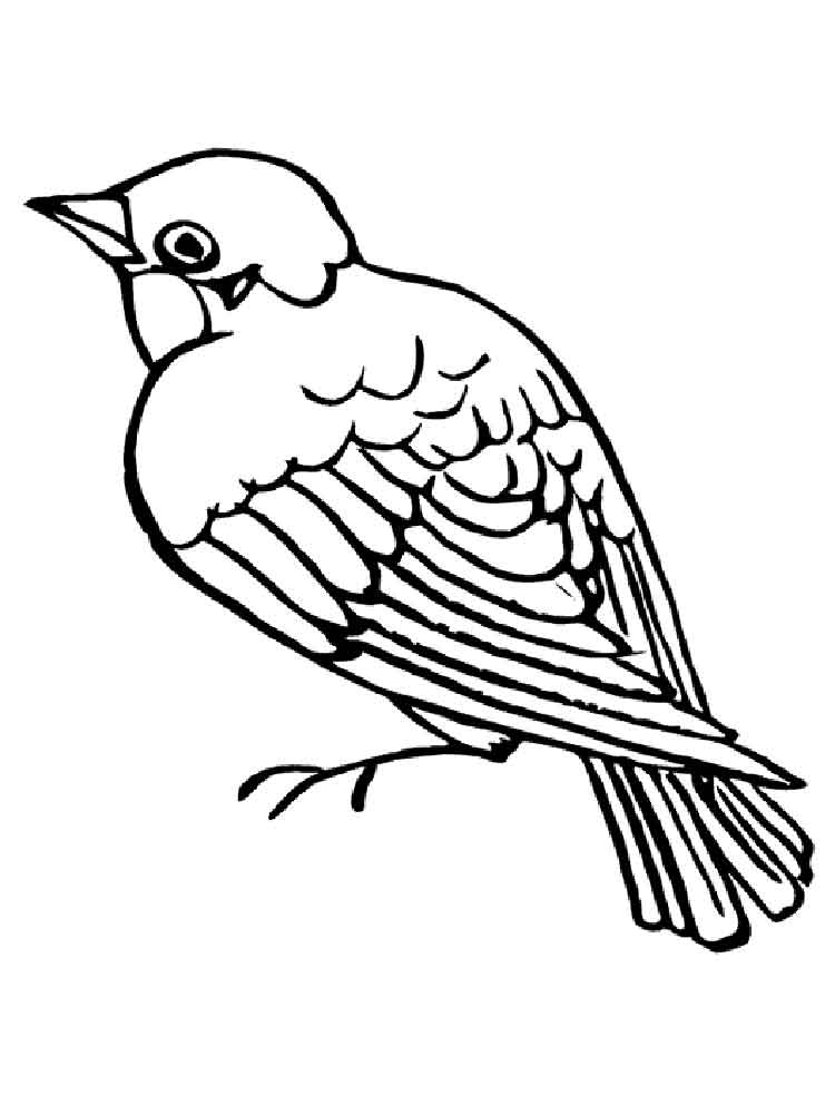 coloring bird printable sparrow coloring pages download and print sparrow printable bird coloring
