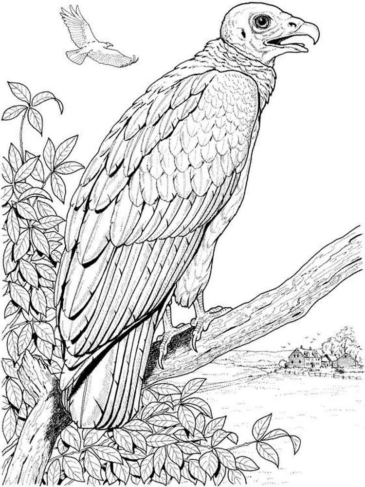 coloring bird printable vulture coloring pages download and print vulture printable bird coloring