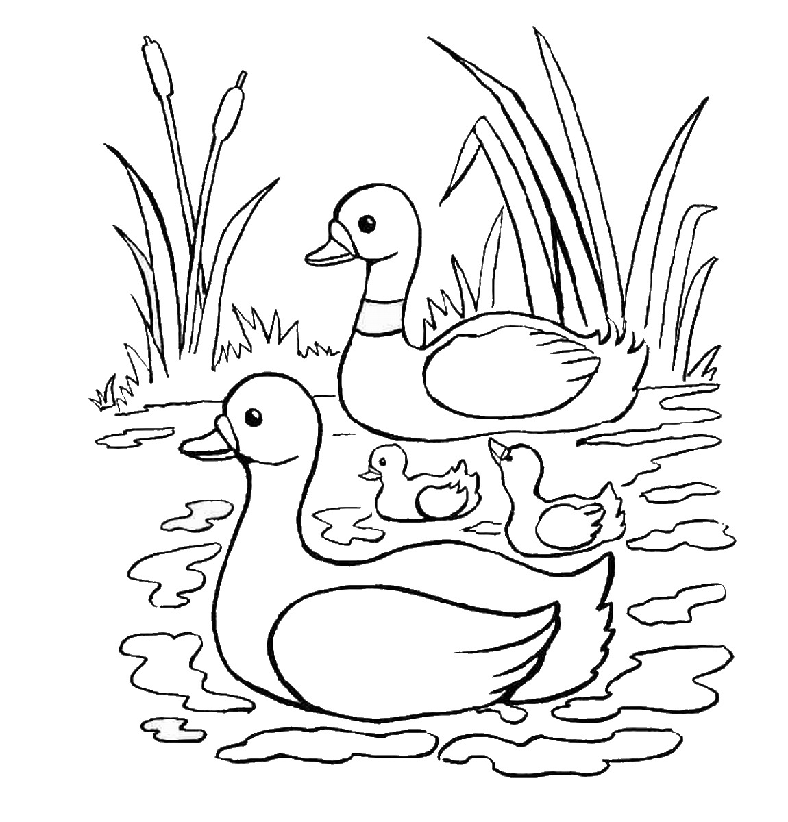 coloring duck pictures free printable duck coloring pages for kids animal place coloring duck pictures