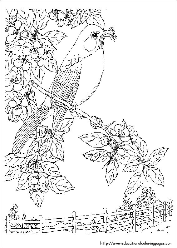 coloring for kids nature fish in the lake of nature coloring page color luna coloring kids for nature