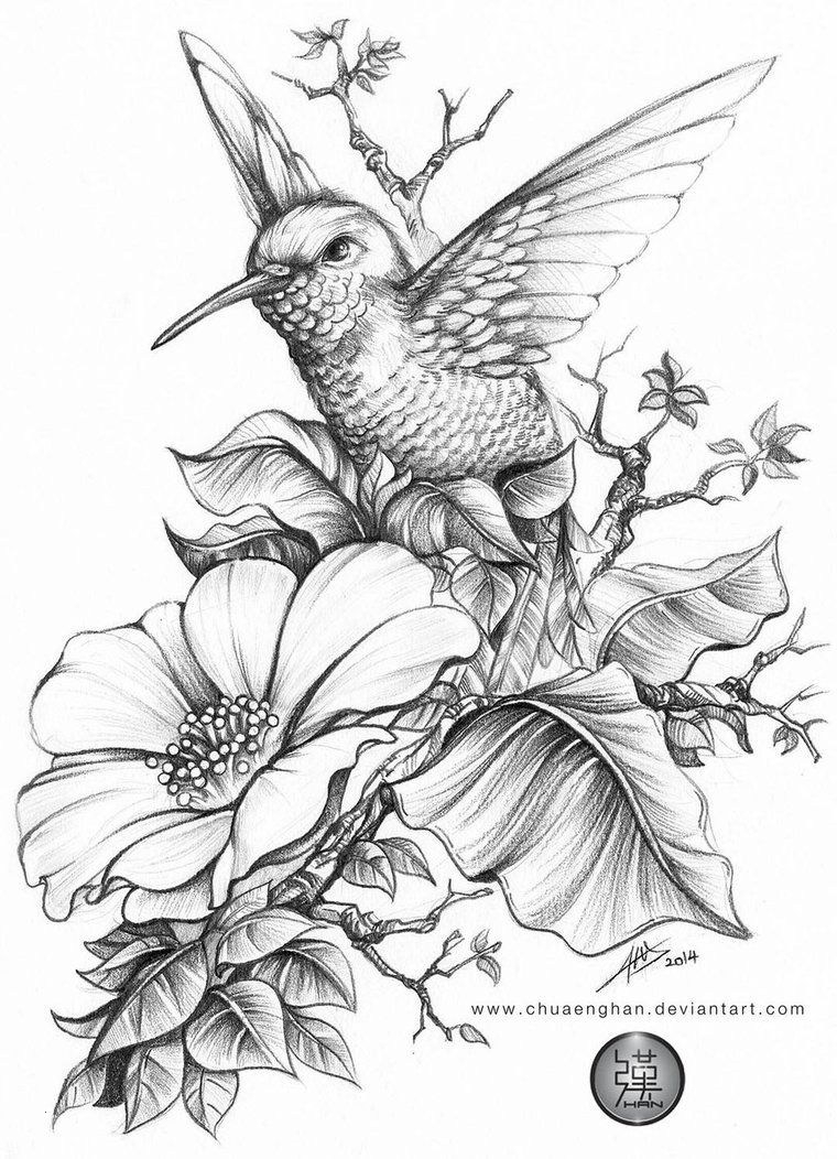 coloring hummingbirds 20 coloring pages of hummingbirds collection coloring sheets hummingbirds coloring