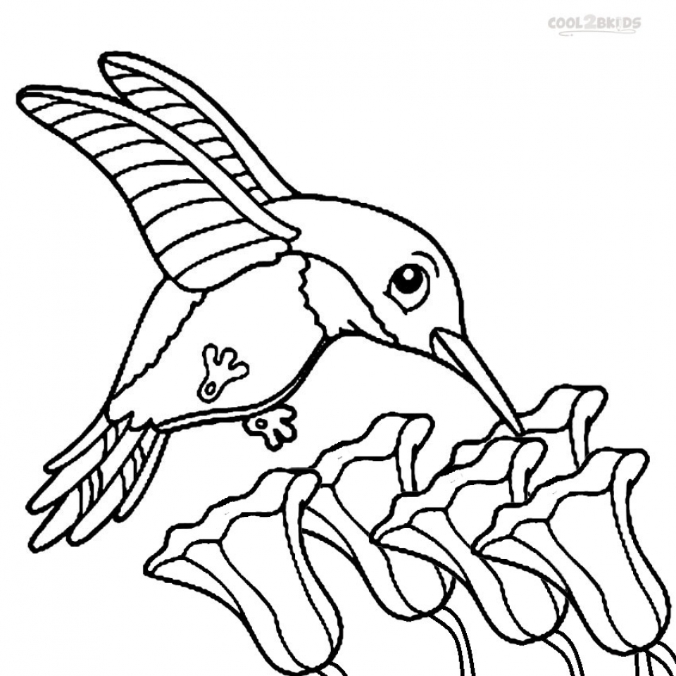 coloring hummingbirds get this printable hummingbird coloring pages 58425 coloring hummingbirds