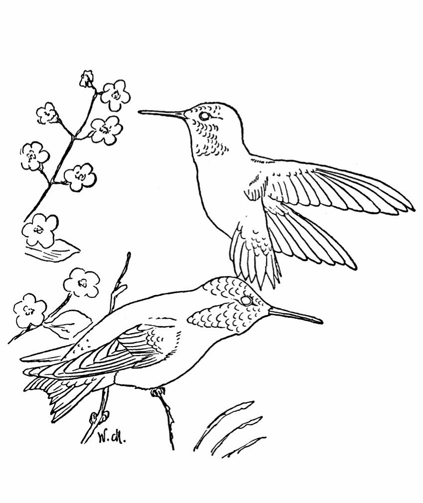 coloring hummingbirds hummingbird coloring pages to download and print for free hummingbirds coloring 1 1