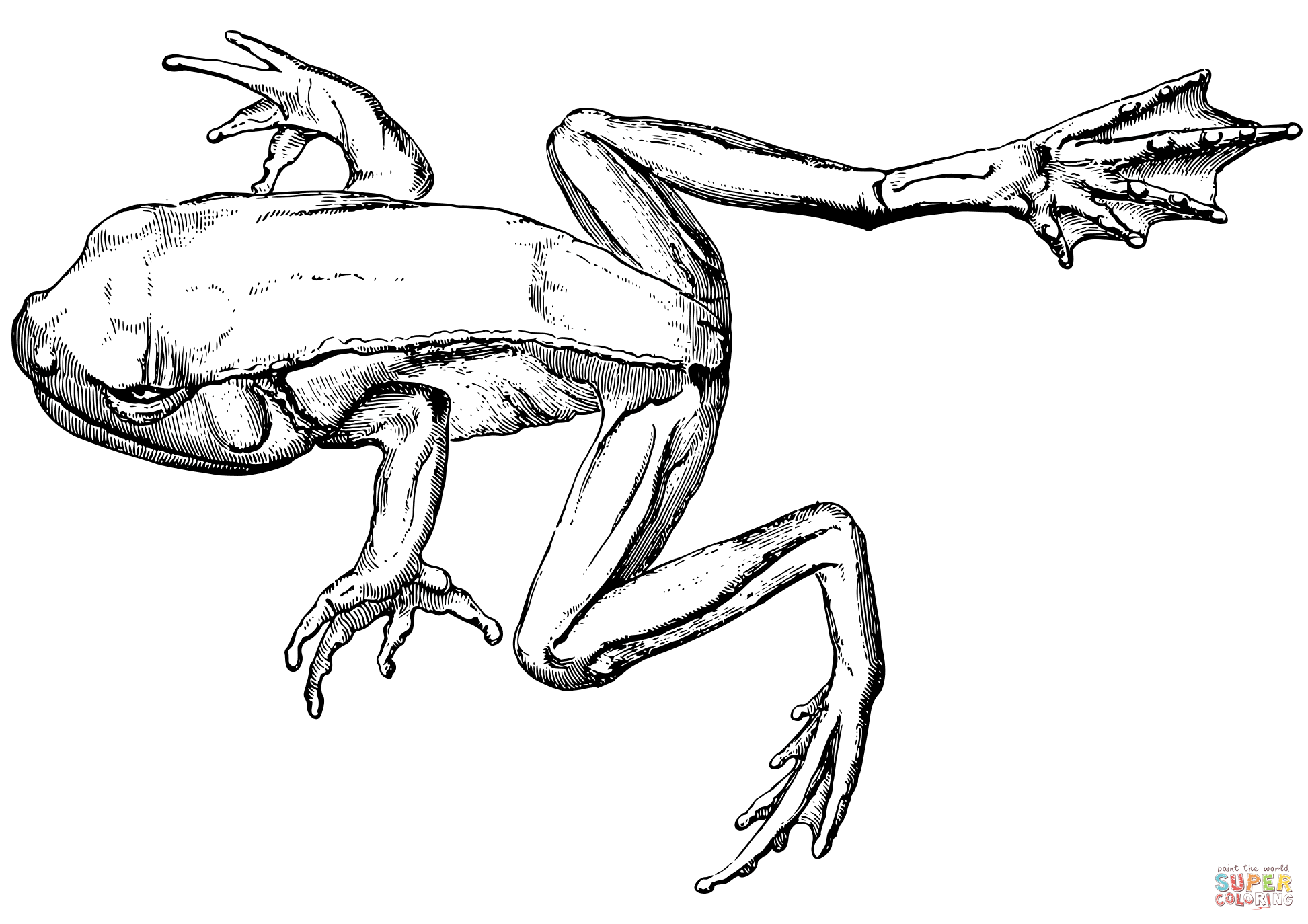 coloring image of a frog coloring ville frog a coloring of image