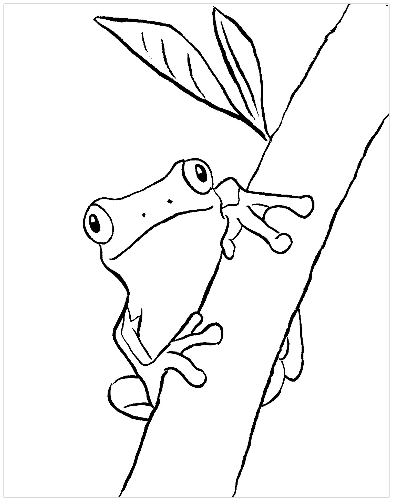 coloring image of a frog frogs for kids frogs kids coloring pages coloring image frog of a