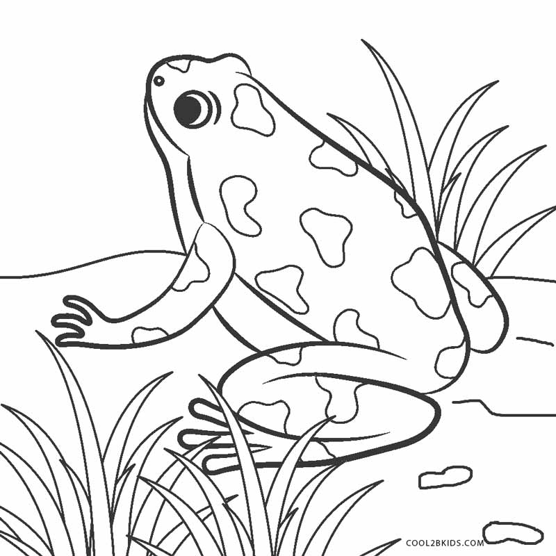 coloring image of a frog frogs to print for free frogs kids coloring pages coloring of frog image a