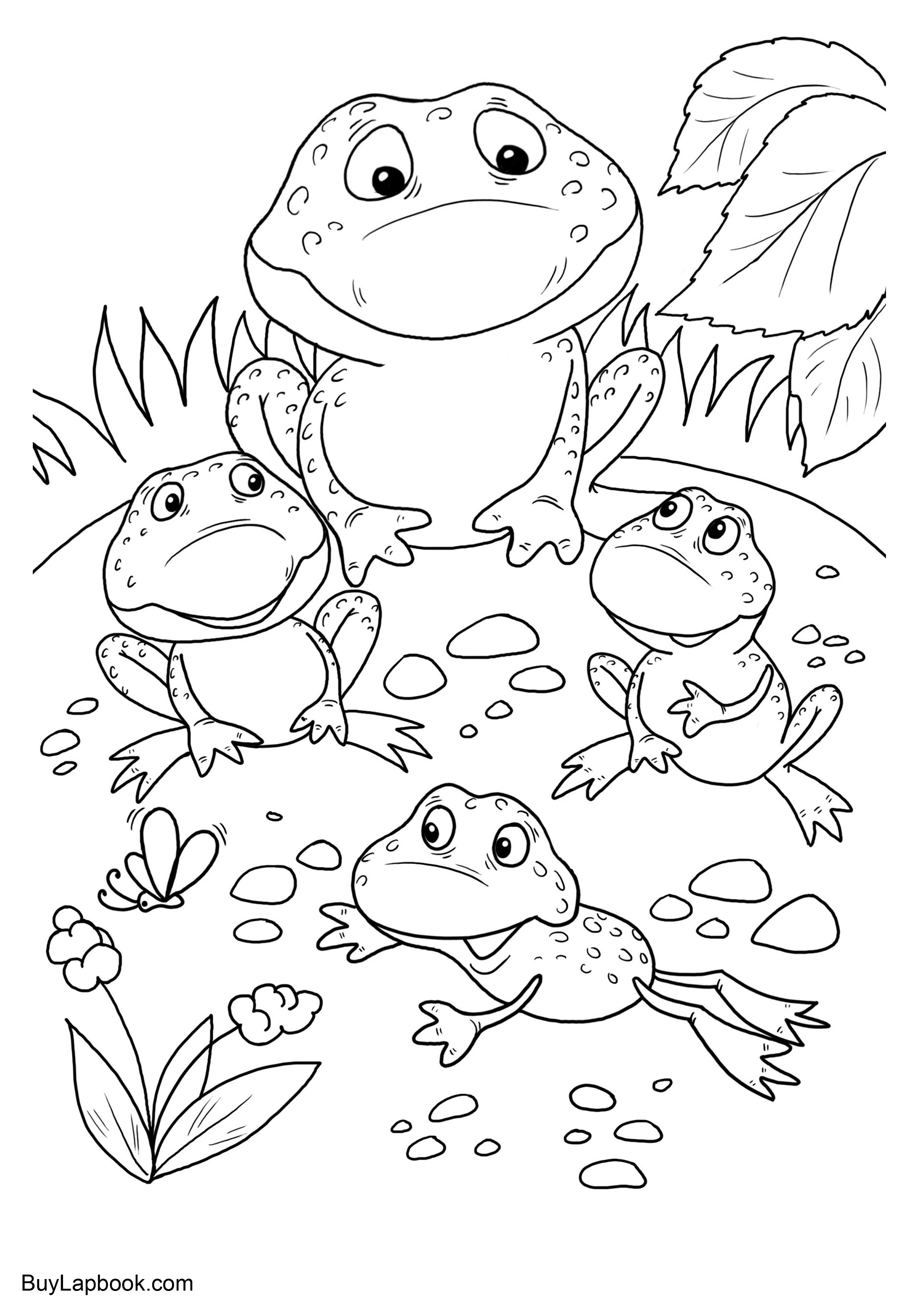 coloring image of a frog the life cycle of a frog free coloring pages buylapbook frog coloring of image a