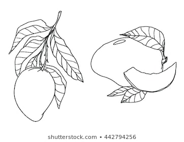 coloring mango outline images mango coloring page getcoloringpagescom mango images outline coloring