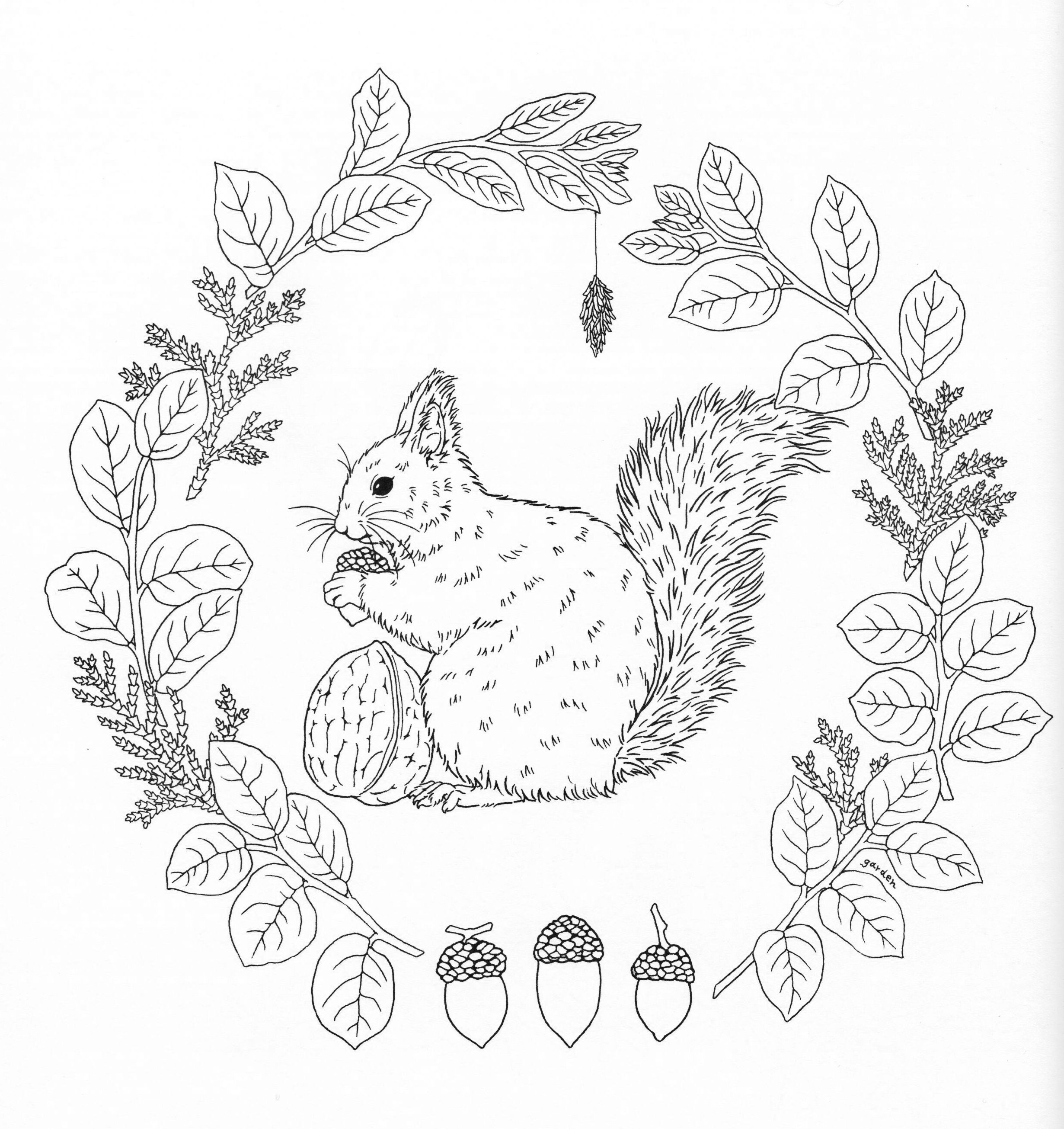 coloring nature images nature coloring pages educational fun kids coloring images nature coloring