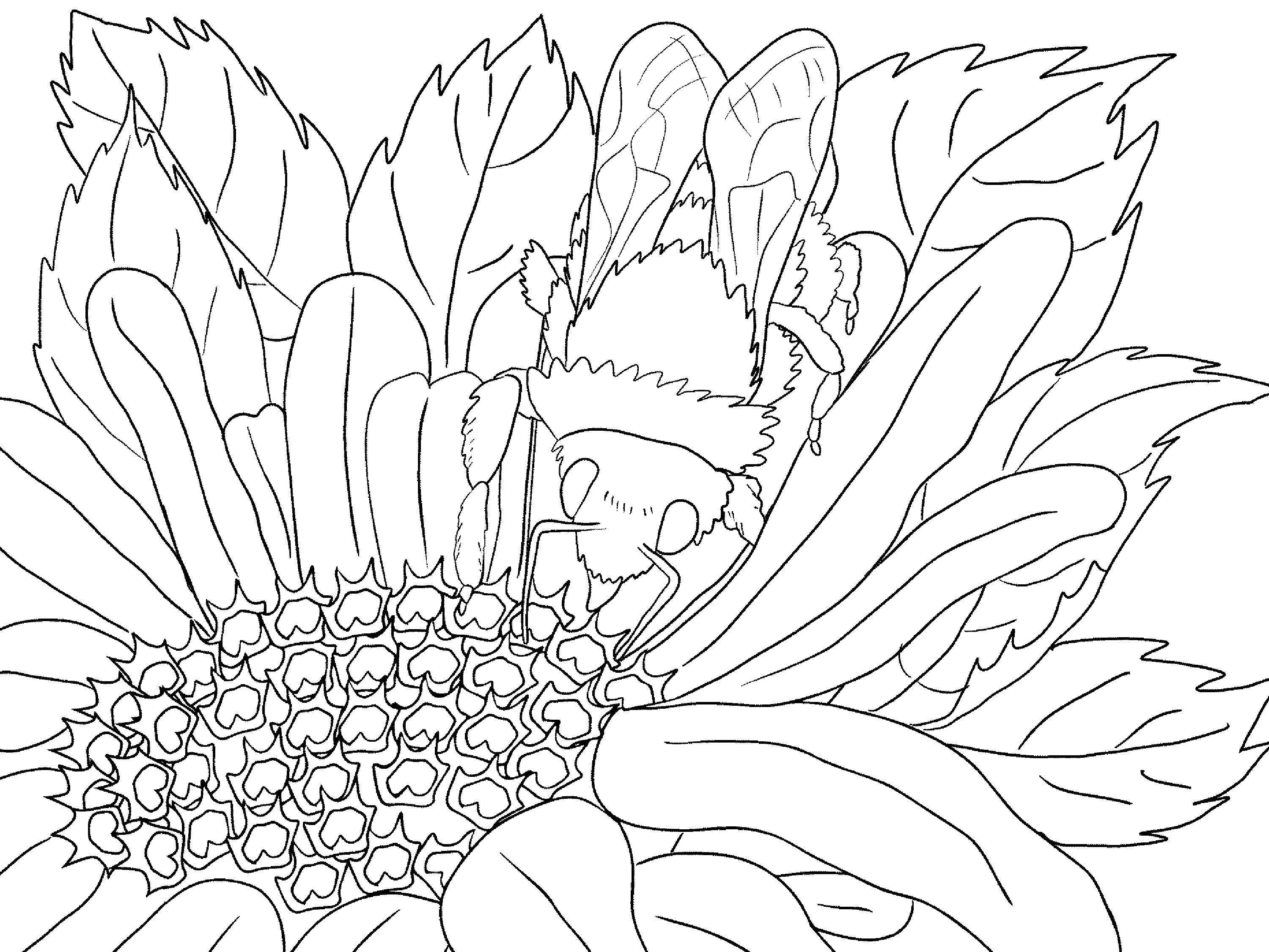 coloring nature images printable nature coloring pages for kids cool2bkids nature images coloring