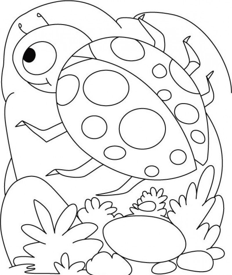 coloring page ladybug ladybug coloring pages kidsuki coloring page ladybug 1 1