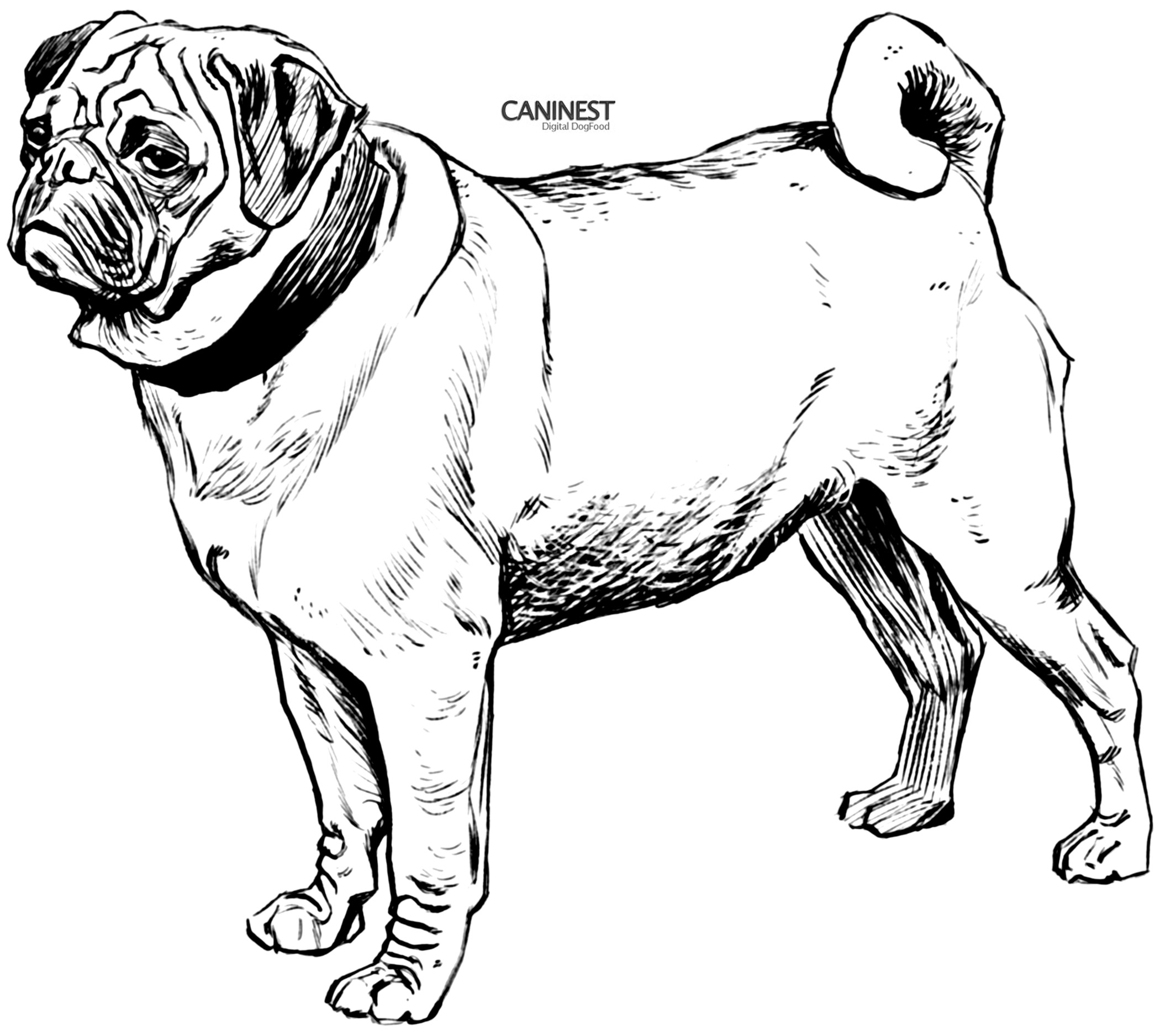 coloring page of a dog animals coloring pages cute puppy playing kids coloring dog of a page