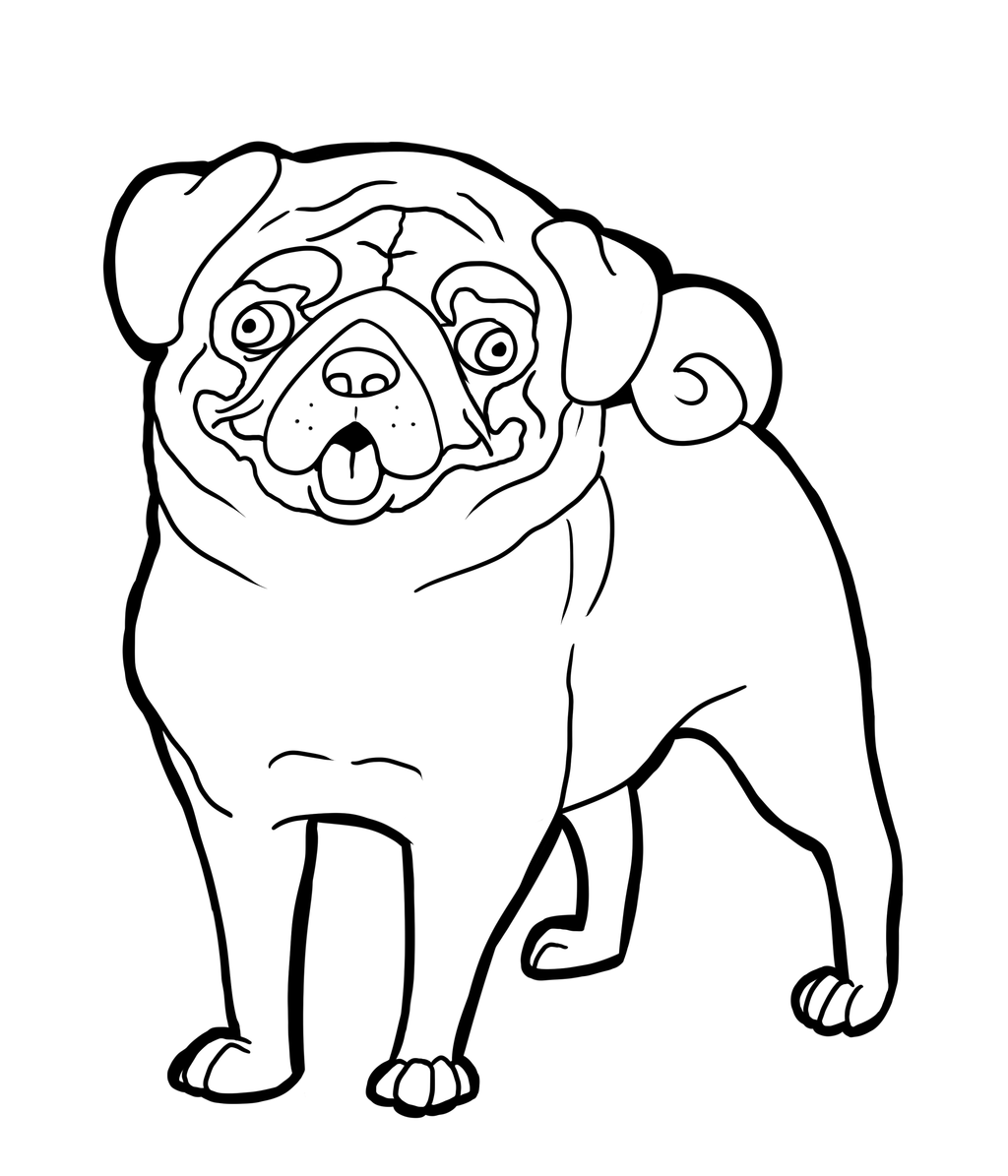 coloring page of a dog pug coloring pages to download and print for free a dog coloring page of