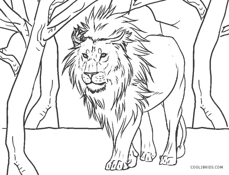 coloring page of a lion free printable lion coloring pages for kids of page a lion coloring