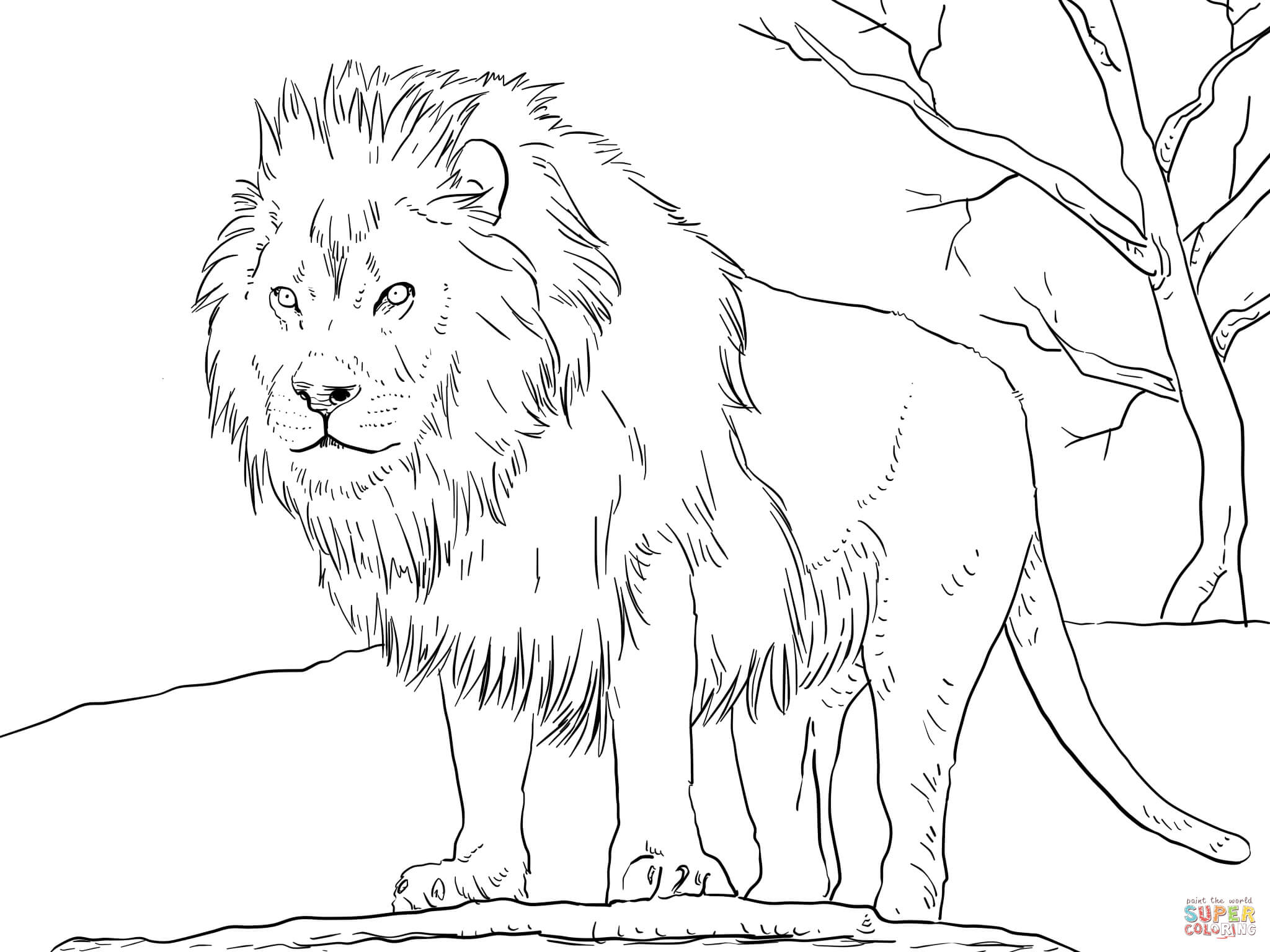 coloring page of a lion male african lion coloring page free printable coloring lion a of page coloring