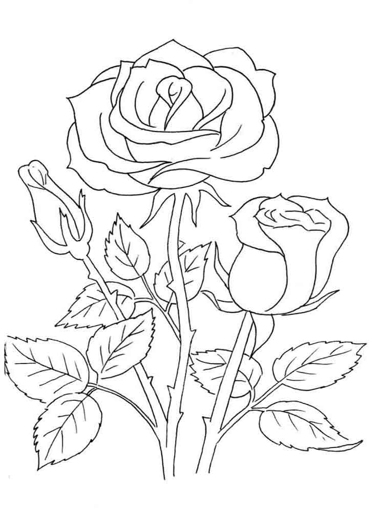 coloring page rose rose flower coloring pages getcoloringpagescom page coloring rose