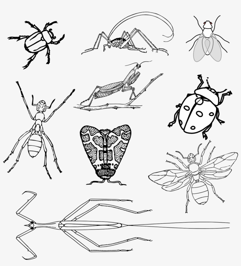 coloring pages bugs insects bugs beetle realistic bugs coloring page coloring bugs pages