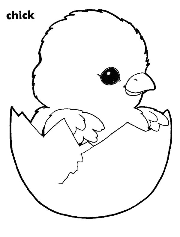 coloring pages of baby chicks baby chick coloring pages download and print baby chick chicks of coloring pages baby