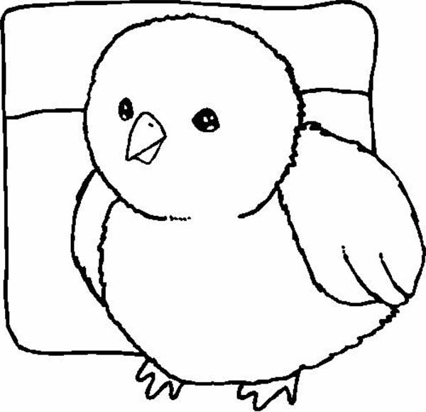 coloring pages of baby chicks baby chick coloring pages download and print baby chick coloring of chicks pages baby