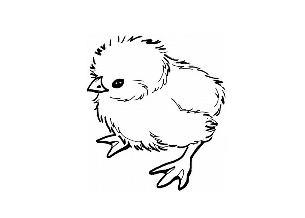 coloring pages of baby chicks baby chick coloring pages getcoloringpagescom baby pages coloring chicks of