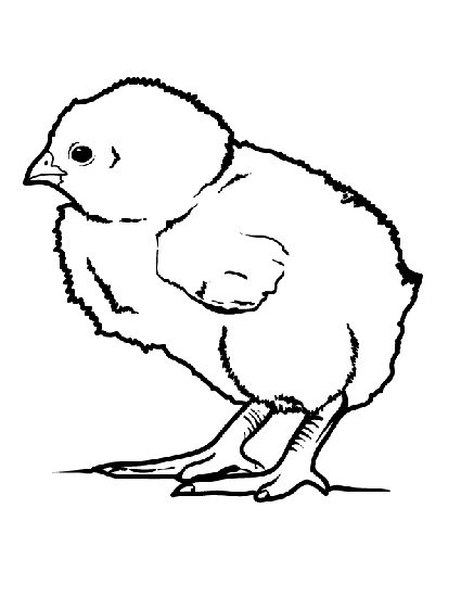 coloring pages of baby chicks baby chick coloring pages getcoloringpagescom of baby coloring chicks pages