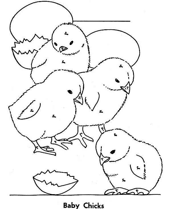 coloring pages of baby chicks baby chick in egg coloring page coloring pages for all chicks of coloring baby pages