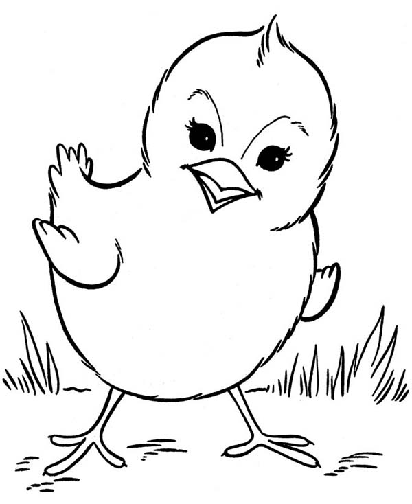 coloring pages of baby chicks beautiful baby chick posing coloring page kids play color baby coloring of pages chicks