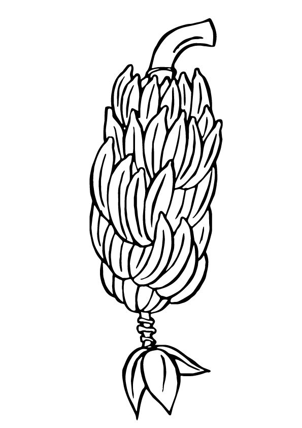 coloring pages of bananas fruit coloring pages getcoloringpagescom of coloring bananas pages