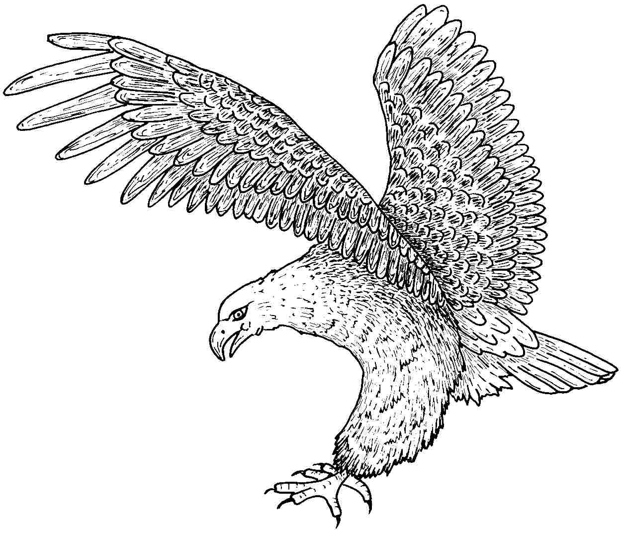 coloring pages of eagles free printable bald eagle coloring pages for kids of coloring eagles pages