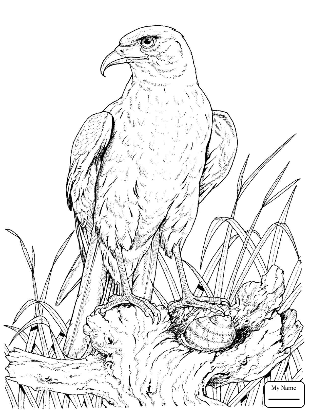 coloring pages of eagles free printable eagle coloring pages for kids of coloring pages eagles