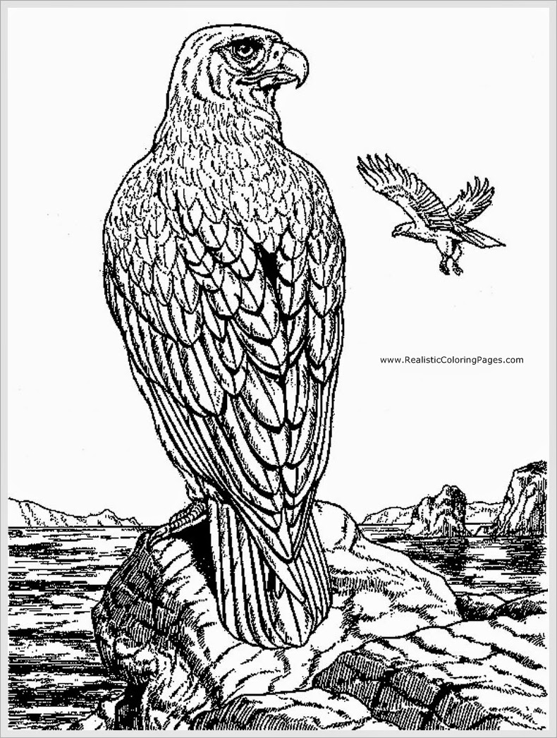 coloring pages of eagles free printable eagle coloring pages for kids pages coloring eagles of