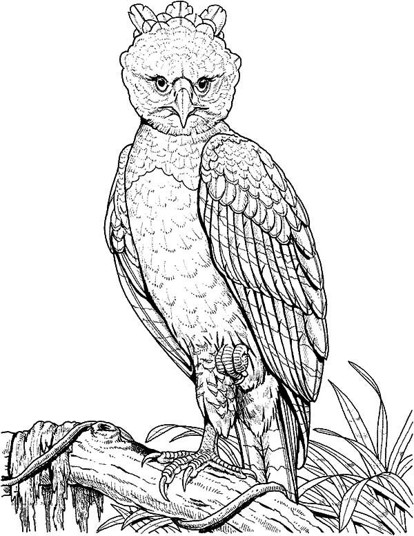 coloring pages of eagles printable eagle coloring pages eagles coloring pages of