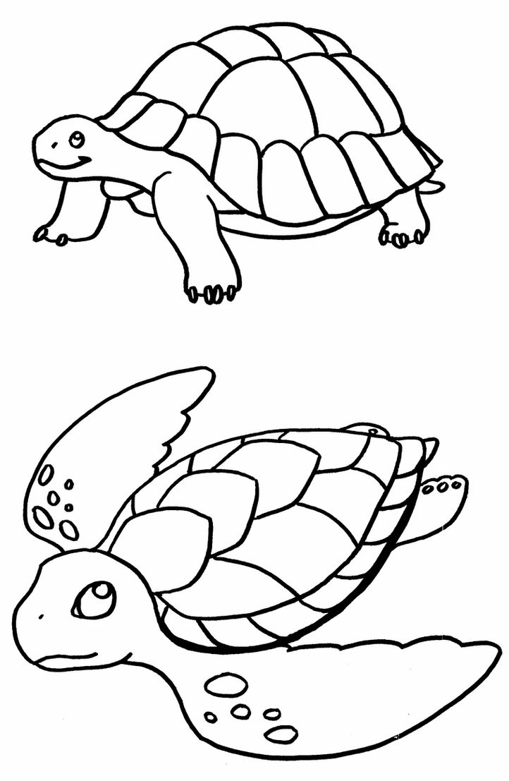 coloring pages of turtle coloring pages turtles by terasullen on deviantart pages of turtle coloring