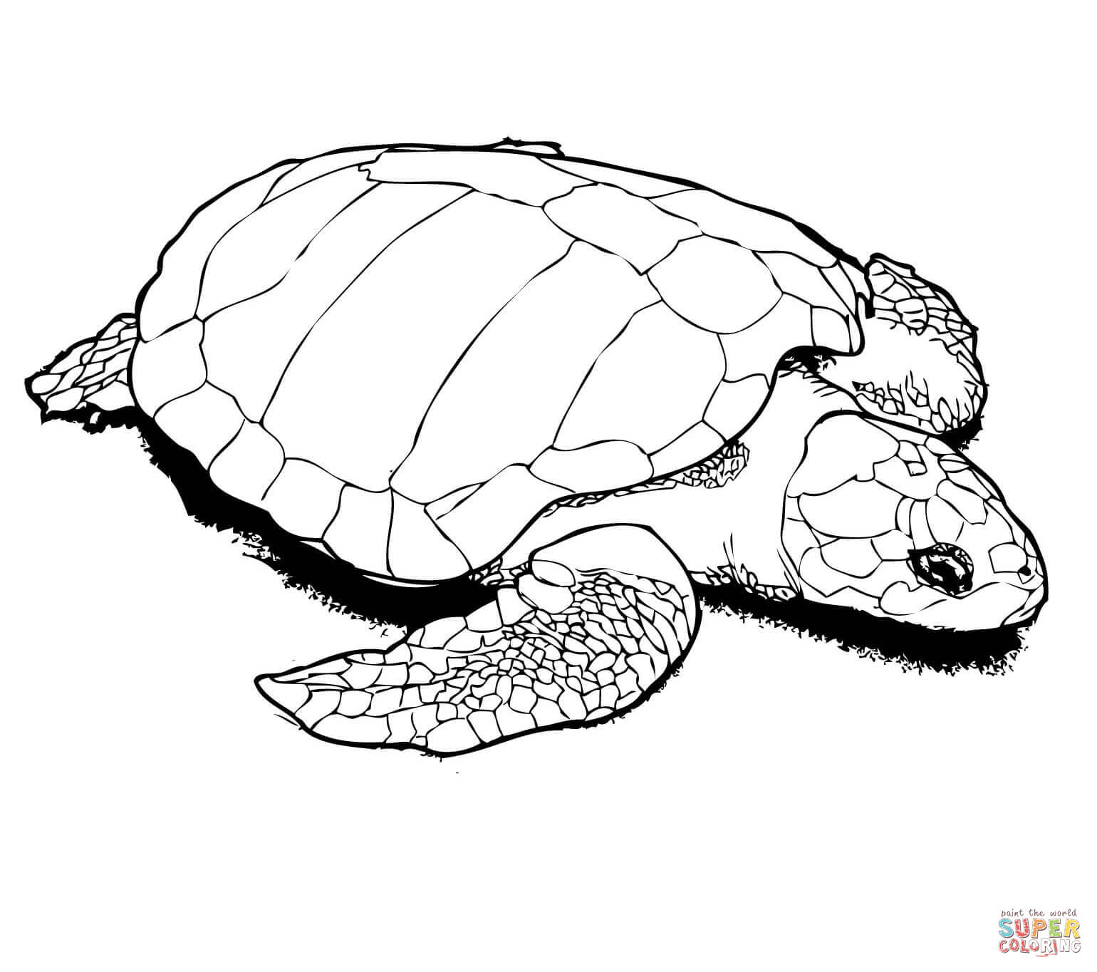coloring pages of turtle sea turtle line drawing at getdrawings free download turtle of pages coloring