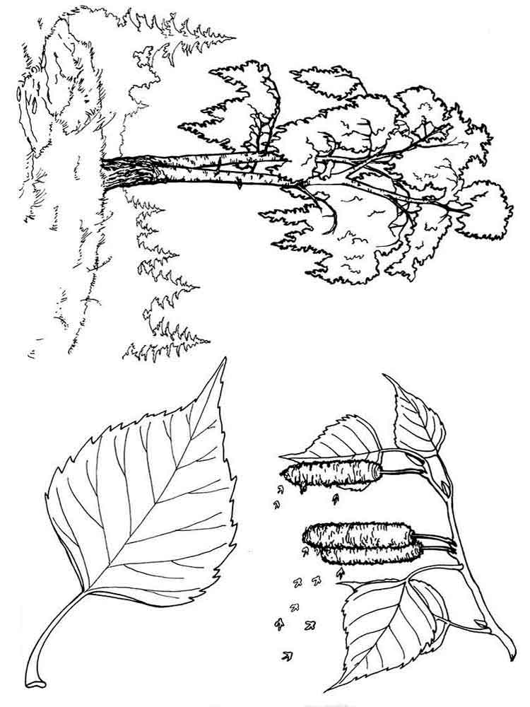 coloring pages trees free printable tree coloring pages for kids coloring trees pages