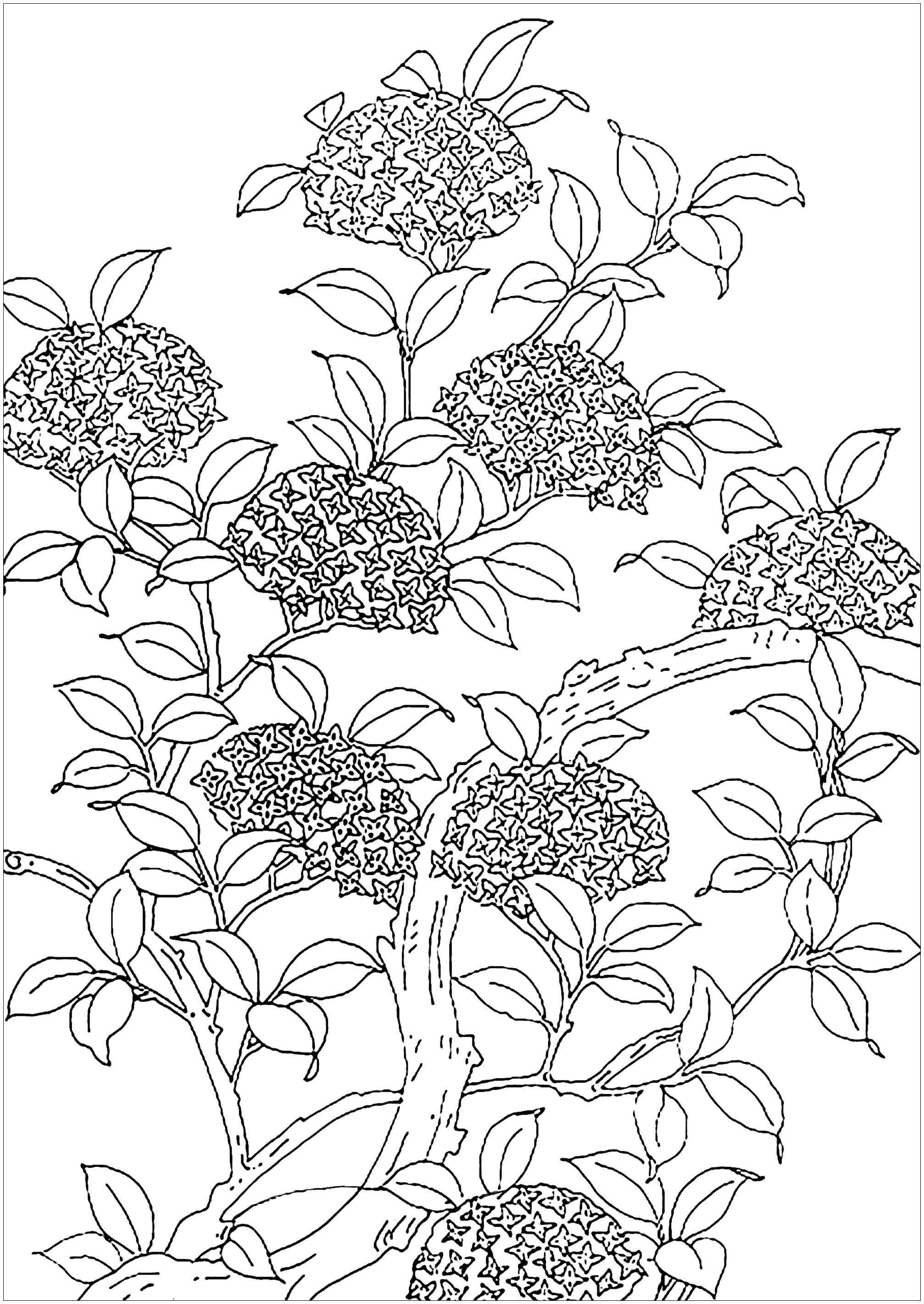 coloring pages trees free printable tree coloring pages for kids cool2bkids trees pages coloring