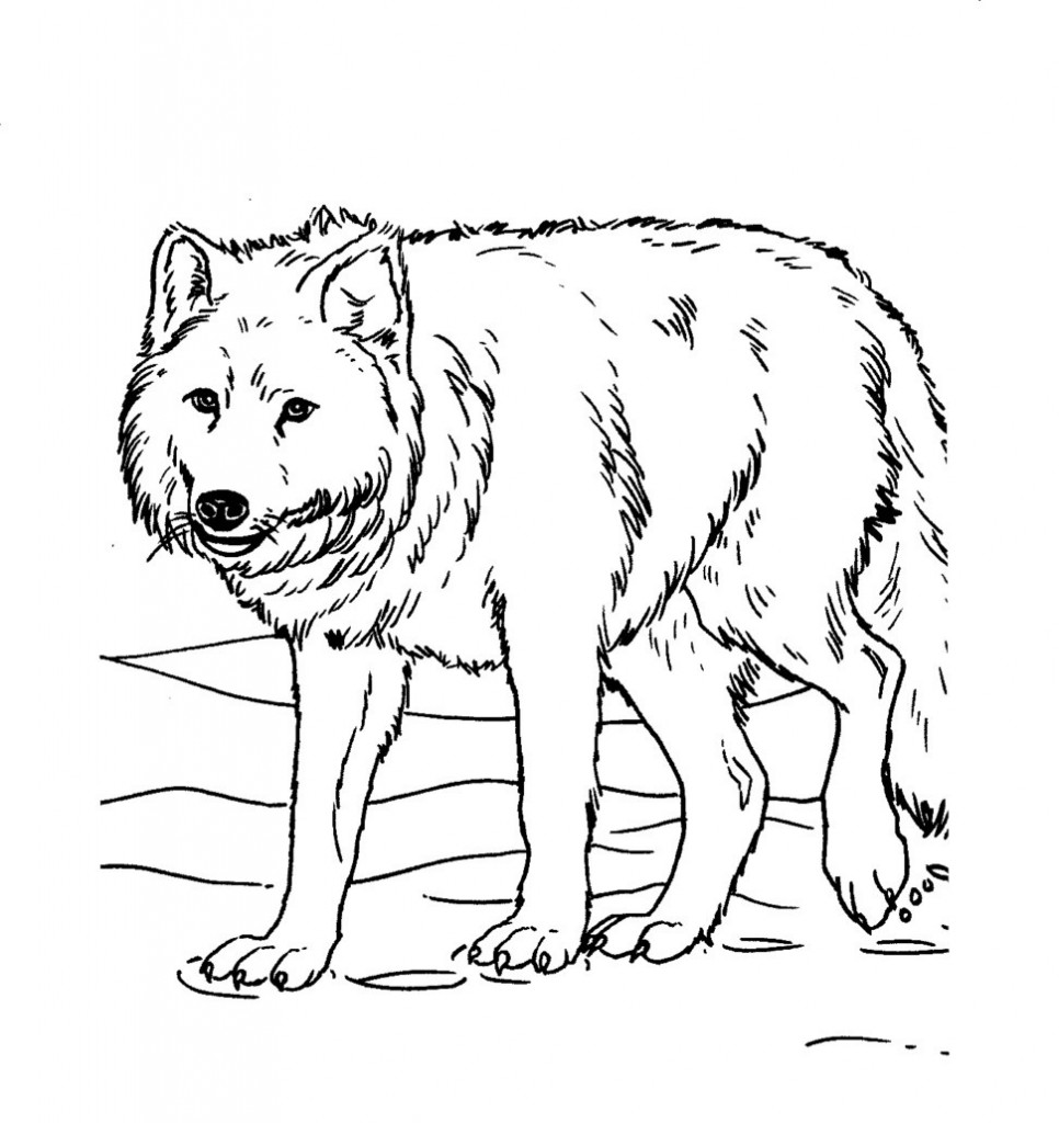 coloring pages wolves print download wolf coloring pages theme wolves coloring pages 1 1