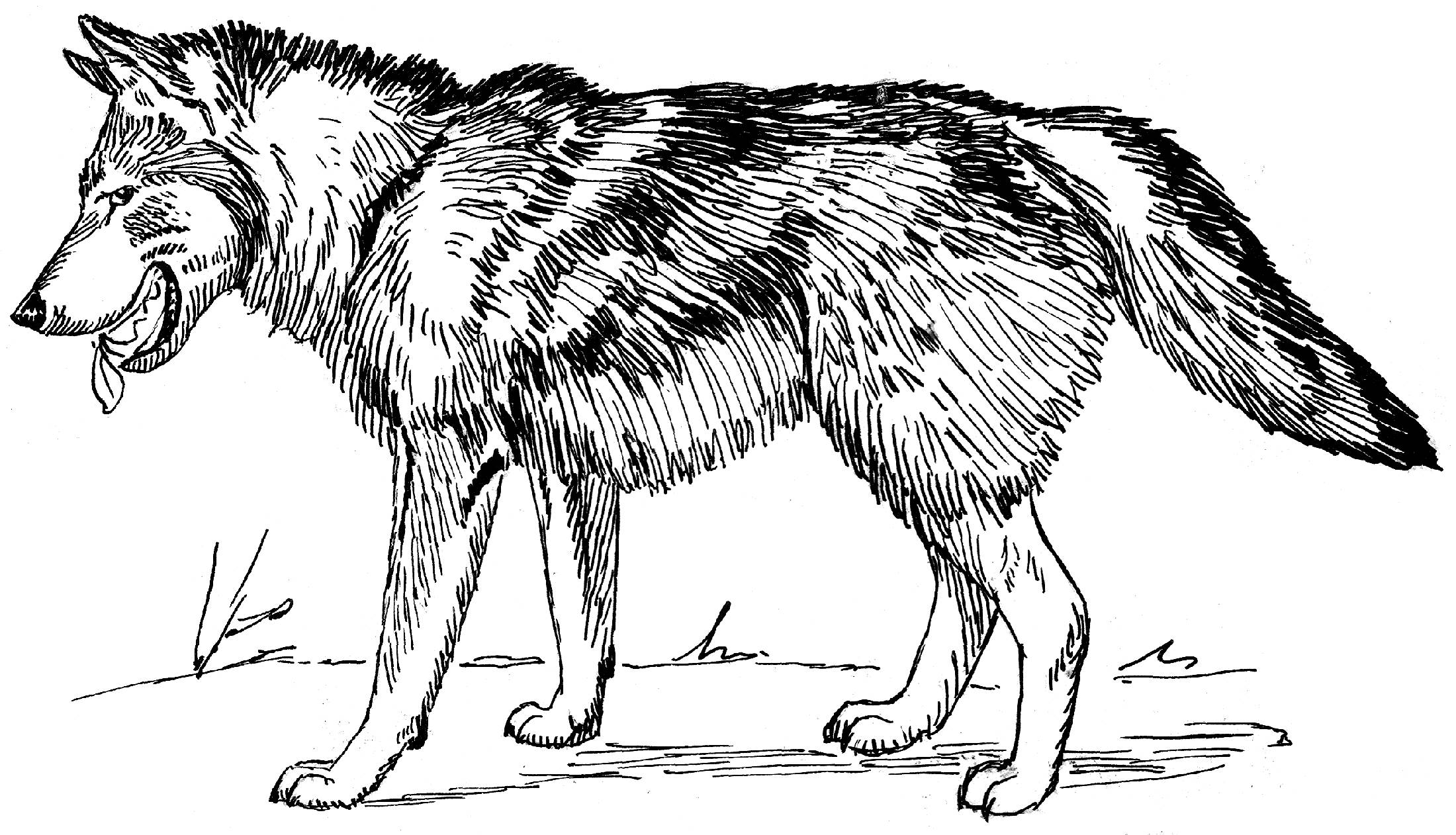coloring pages wolves wolves for coloring coloring pages wolves