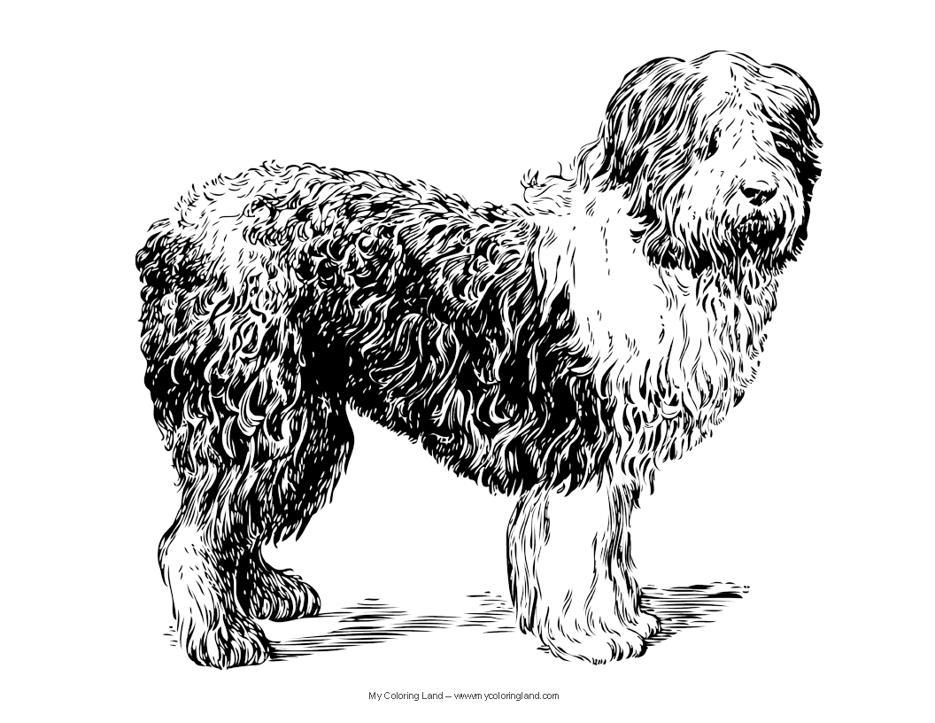 coloring pic of dog dogs and puppies coloring page pic dog coloring of
