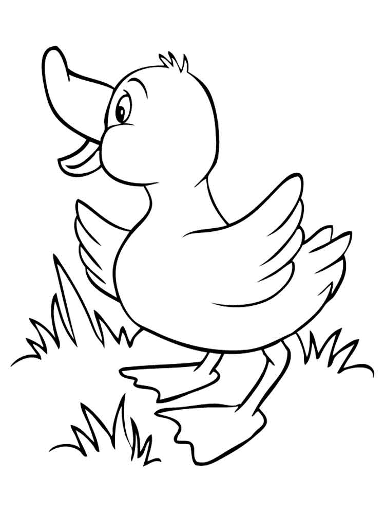 coloring pic of duck baby duck coloring pages at getcoloringscom free of coloring pic duck