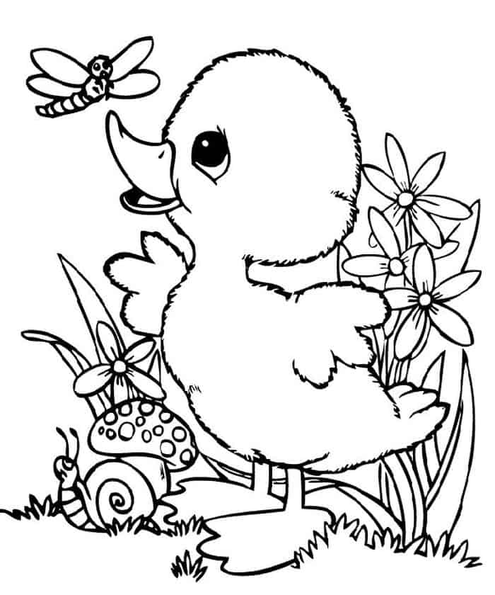 coloring pic of duck bird coloring pages pic duck coloring of